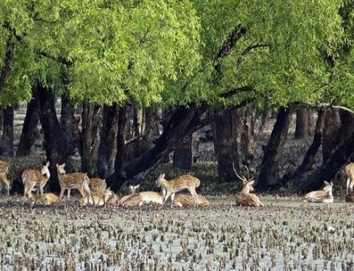 Sundarbans Tour Package