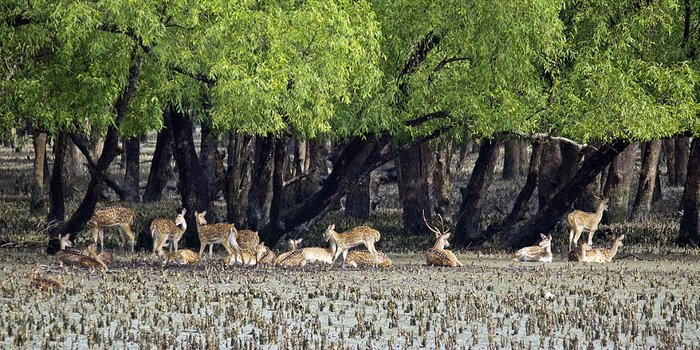 Sundarbans Tour Package