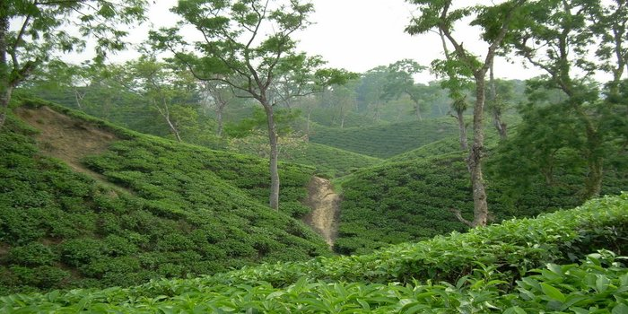 Sylhet Tour Package